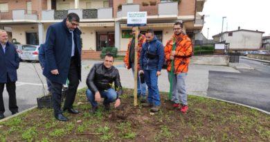 Al via la piantumazione di 6 milioni di alberi nel Lazio. Anche ad Artena