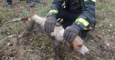 Eccezionale salvataggio dei Vigili del Fuoco di Sala Consilina: liberato un cane incastrato nei tubi del depuratore di San Rufo