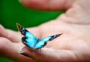 Dal bruco alla farfalla: il CAMBIAMENTO della QUALITA' DELLA VITA