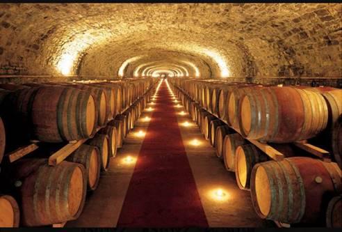 OenoFuture: la migliore azienda per i vini da investimento